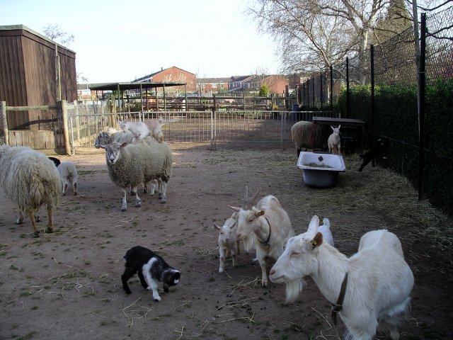 Animal welfare - farm 1