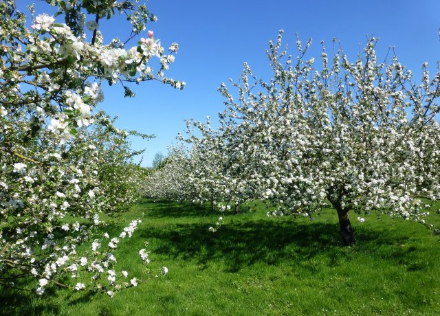 Fruit trees at the community orchard in Brocks Hill Country Park