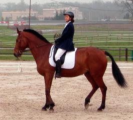 Animal welfare - horses 2