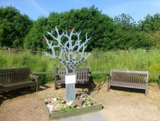 Friends of Brocks Hill sponsored memorial tree